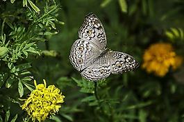 蝴蝶,泰国,国家公园。