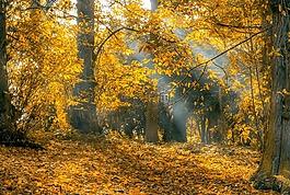 秋,叶子,光线