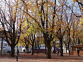 秋天的樹木,葉子,樹木