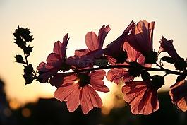 花卉,太陽,春天