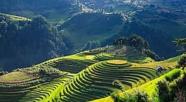 風景,稻田,露臺