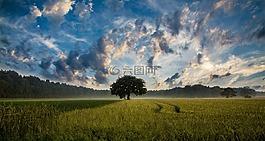 樹,字段,麥田
