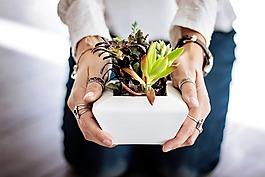 多肉植物,手,女子