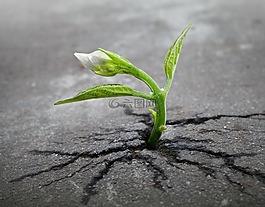 萌芽,植物,成长