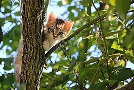 貓,小貓,樹
