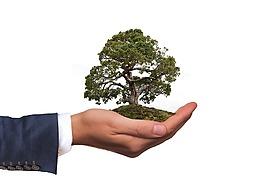 環境,樹,性質
