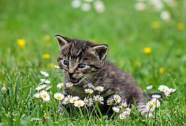 基蒂,貓,孩子的貓