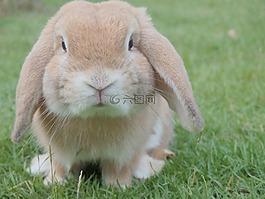 兔子,兔,复活节