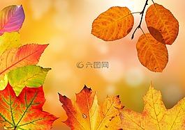 秋季,叶子,丰富多彩