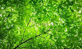 木材,树叶,树枝