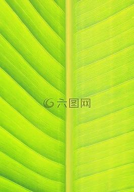 叶,绿色,自然