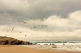 海邊,海濱,海鷗