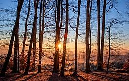 森林,景觀,太陽