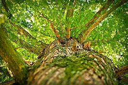 樹,審美,分支機構