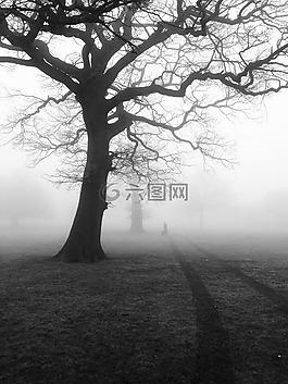樹,薄霧,霧