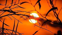 枝杈,日落,自然