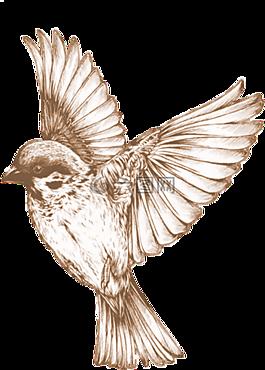 鸟,透明,元素