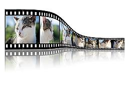 貓,視頻,照片