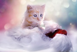 小貓,灰色,心臟