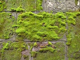 苔,墙,绿色