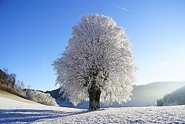 寒冬,樹,霜