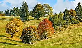 秋季,秋季森林,樹木