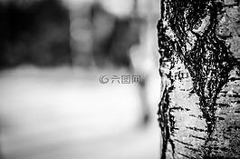 冬季,雪,樹