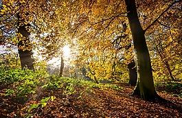 秋天的树叶,秋天树叶,此刻