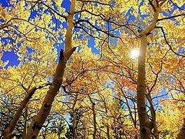 叶子,秋天,太子港