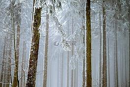森林,霧,樹木