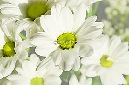 鲜花,花,植物