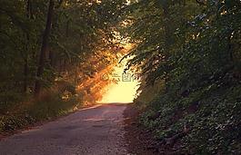 陽光,森林,方式