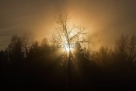 日落,樹,薄霧
