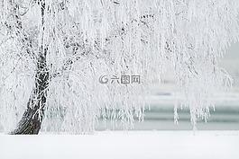冬天,樹,雪