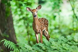野生动物,年轻,哺乳动物
