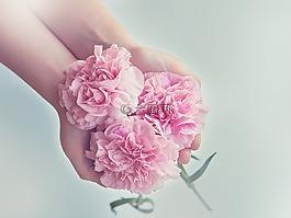 丁香,鲜花,粉红色