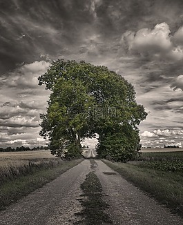 格羅夫的樹木,離,心情