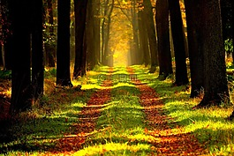 森林,遠景,旅游