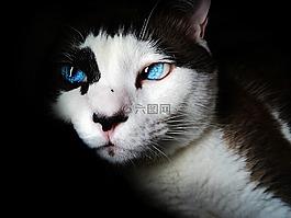 暹,蓝色的眼睛,可爱