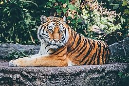 动物,大猫,野生动物园