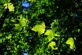 飞机,叶子,树