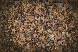 秋天的颜色,秋天的树叶,秋
