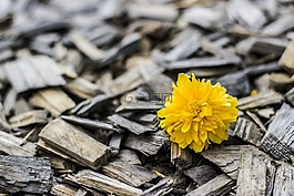 黄色,花,木