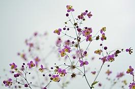 花,花的,开花