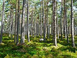 森林,樹,生態