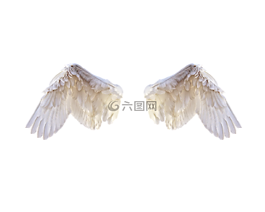 白色的翅膀,翅膀,鸟