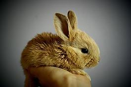 兔子,手掌,手
