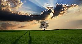 農村,樹,景觀