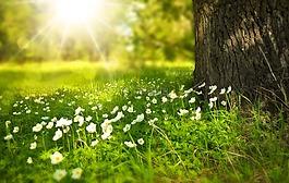 春,樹,鮮花