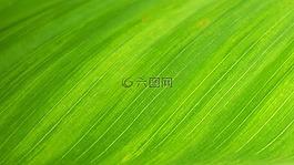 綠葉,自然,壁紙